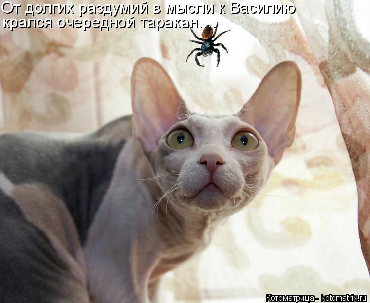 Котоматрица: От долгих раздумий в мысли к Василию крался очередной таракан....