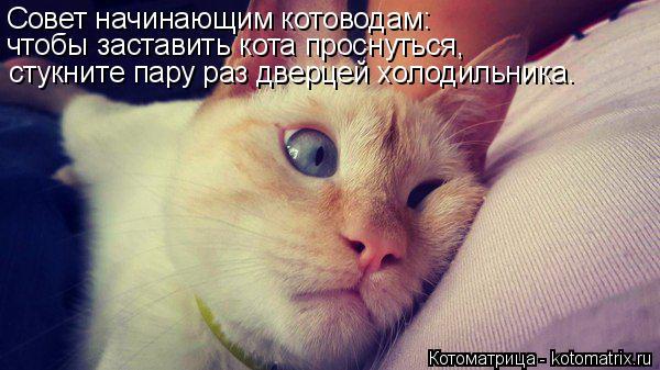 Котоматрица: Совет начинающим котоводам: чтобы заставить кота проснуться, стукните пару раз дверцей холодильника.