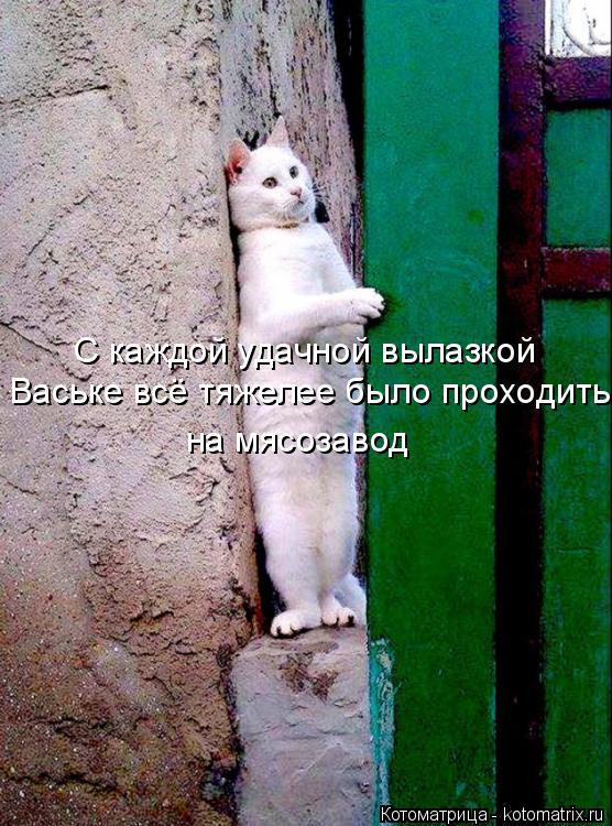 Котоматрица: С каждой удачной вылазкой Ваське всё тяжелее было проходить на мясозавод