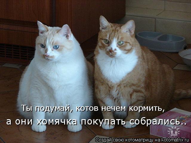 Котоматрица: Ты подумай, котов нечем кормить,  а они хомячка покупать собрались..