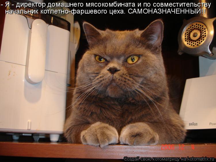 Котоматрица: - Я - директор домашнего мясокомбината и по совместительству начальник котлетно-фаршевого цеха. САМОНАЗНАЧЕННЫЙ!!