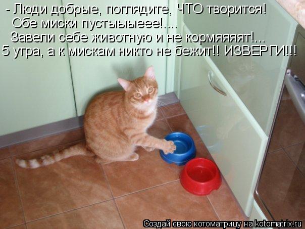 Котоматрица: - Люди добрые, поглядите, ЧТО творится! Обе миски пустыыыеее!.... Завели себе животную и не кормяяяят!...  5 утра, а к мискам никто не бежит!! ИЗВЕР