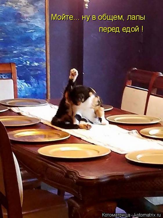 Котоматрица: Мойте... ну в общем, лапы перед едой !