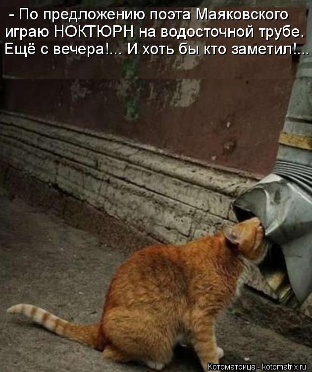 Котоматрица: - По предложению поэта Маяковского играю НОКТЮРН на водосточной трубе. Ещё с вечера!... И хоть бы кто заметил!...