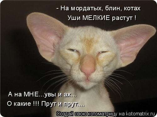 Котоматрица: - На мордатых, блин, котах Уши МЕЛКИЕ растут ! А на МНЕ...увы и ах... О какие !!! Прут и прут....