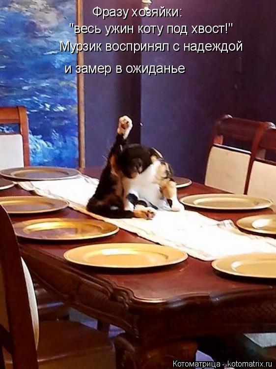 """Котоматрица: Фразу хозяйки:  """"весь ужин коту под хвост!"""" Мурзик воспринял с надеждой  и замер в ожиданье"""