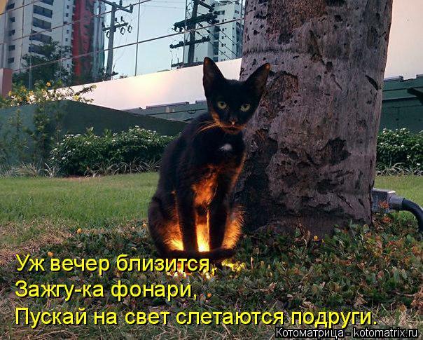 Котоматрица: Уж вечер близится, Зажгу-ка фонари, Пускай на свет слетаются подруги.