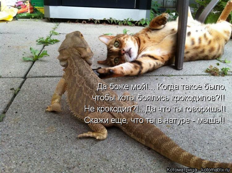 Котоматрица: Да боже мой!... Когда такое было, чтобы коты боялись крокодилов?!! Не крокодил?!...Да что ты говоришь!! Скажи еще, что ты в натуре - мышь!!