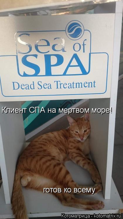 Котоматрица: Клиент СПА на мертвом море! готов ко всему