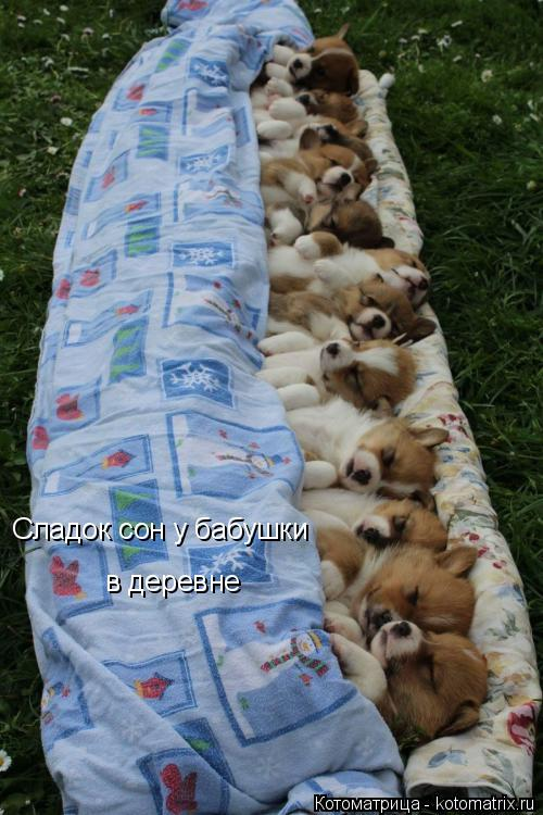 Котоматрица: Сладок сон у бабушки  в деревне