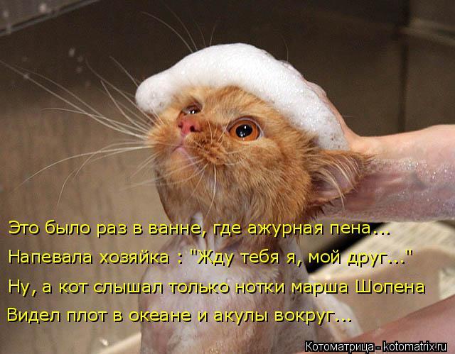 """Котоматрица: Это было раз в ванне, где ажурная пена... Ну, а кот слышал только нотки марша Шопена Напевала хозяйка : """"Жду тебя я, мой друг..."""" Видел плот в океа"""