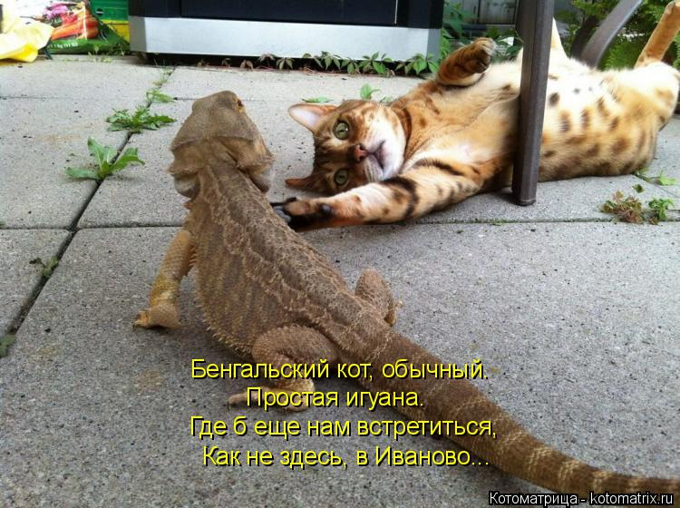 http://kotomatrix.ru/images/lolz/2017/04/17/kotomatritsa_4s.jpg