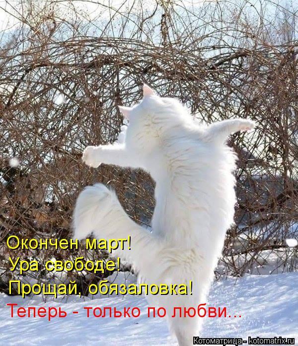 Котоматрица: Окончен март!  Ура свободе! Прощай, обязаловка! Теперь - только по любви...