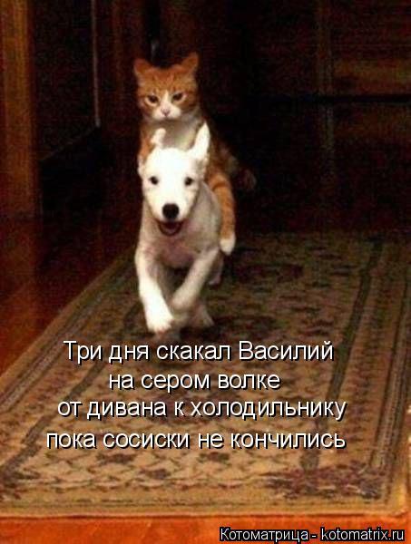 Котоматрица: Три дня скакал Василий на сером волке от дивана к холодильнику пока сосиски не кончились