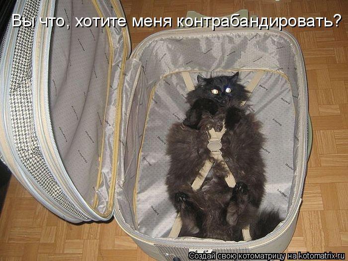 Котоматрица: Вы что, хотите меня контрабандировать?