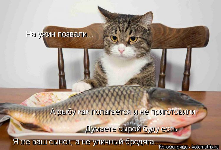 Котоматрица: На ужин позвали... А рыбу как полагается и не приготовили Думаете сырой буду есть Я же ваш сынок, а не уличный бродяга...