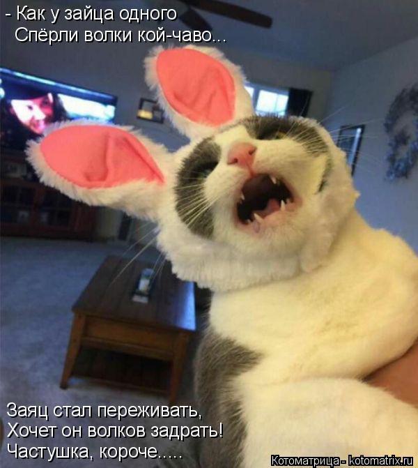 Котоматрица: - Как у зайца одного  Спёрли волки кой-чаво... Заяц стал переживать, Хочет он волков задрать! Частушка, короче.....