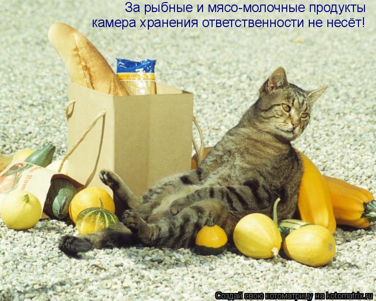 Котоматрица: За рыбные и мясо-молочные продукты  камера хранения ответственности не несёт!