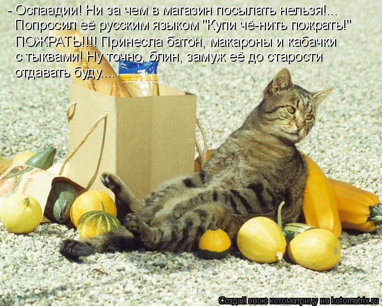 """Котоматрица: - Оспаадии! Ни за чем в магазин посылать нельзя!... Попросил её русским языком """"Купи чё-нить пожрать!"""" ПОЖРАТЬ!!!! Принесла батон, макароны и каб"""