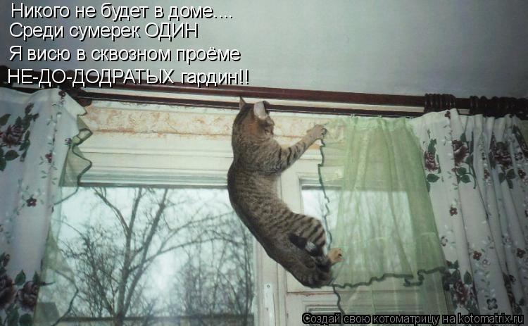 Котоматрица: Никого не будет в доме.... Среди сумерек ОДИН Я висю в сквозном проёме НЕ-ДО-ДОДРАТЫХ гардин!!
