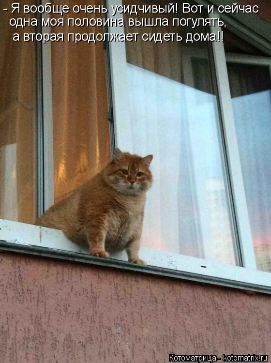Котоматрица: - Я вообще очень усидчивый! Вот и сейчас одна моя половина вышла погулять,  а вторая продолжает сидеть дома!!