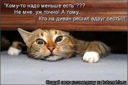 """Котоматрица: """"Кому-то надо меньше есть""""??? Не мне, уж точно! А тому, Кто на диван решил вдруг сесть!!!"""