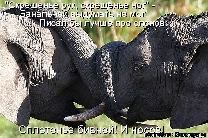 """Котоматрица: """"Скрещенье рук, скрещенье ног"""" -  Банальней выдумать не мог! Писал бы лучше про слонов: Сплетенье бивней! И носов!..."""