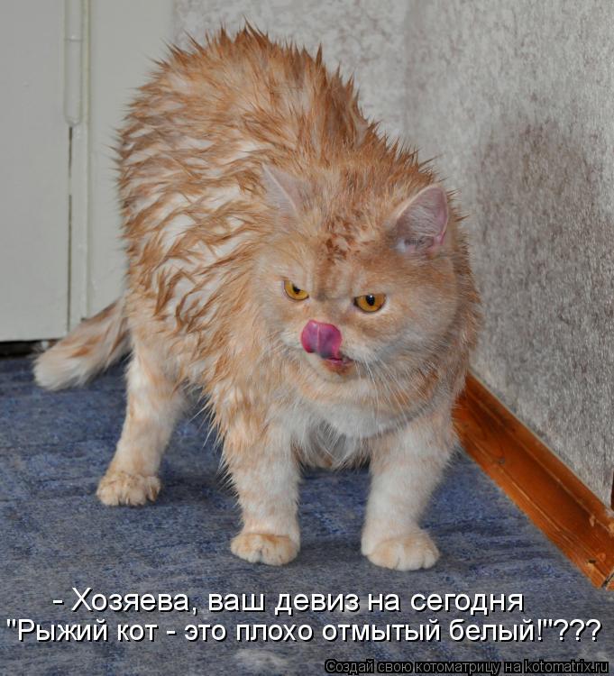 """Котоматрица: """"Рыжий кот - это плохо отмытый белый!""""??? - Хозяева, ваш девиз на сегодня"""