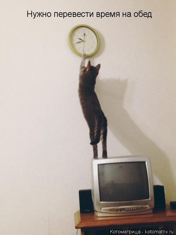 Котоматрица: Нужно перевести время на обед