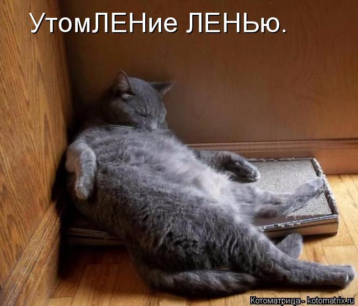 Котоматрица: УтомЛЕНие ЛЕНЬю.
