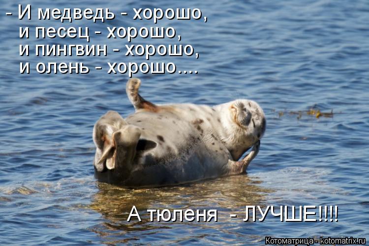 Котоматрица: - И медведь - хорошо, и песец - хорошо, и пингвин - хорошо, и олень - хорошо.... А тюленя  - ЛУЧШЕ!!!!