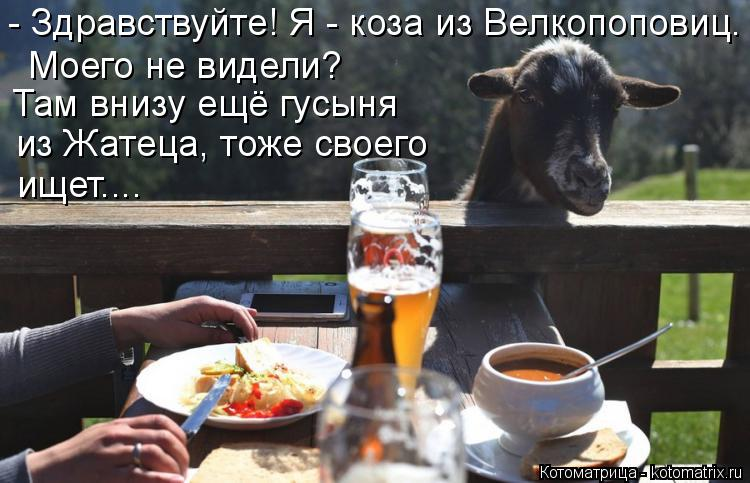 Котоматрица: - Здравствуйте! Я - коза из Велкопоповиц.  Моего не видели? Там внизу ещё гусыня  из Жатеца, тоже своего ищет....
