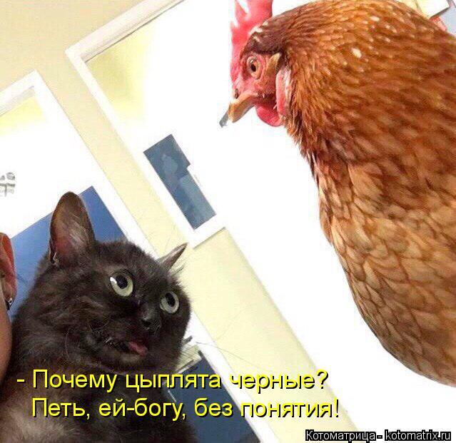 Котоматрица: - Почему цыплята черные? Петь, ей-богу, без понятия!
