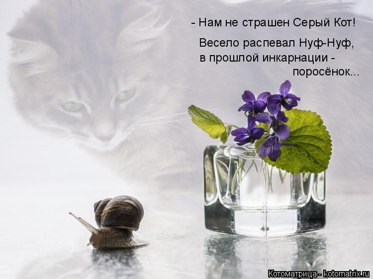 Котоматрица: - Нам не страшен Серый Кот! Весело распевал Нуф-Нуф, в прошлой инкарнации - поросёнок...