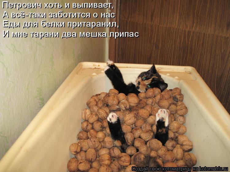 Котоматрица: Петрович хоть и выпивает, А всё-таки заботится о нас  Еды для белки притаранил,  И мне тарани два мешка припас
