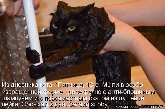 """Котоматрица: Из дневника кота: """"Пятница, 13-е. Мыли в особо извращённой форме - двоекратно с анти-блошиным шампунем и с повсеместным окатом из душевой лейк"""