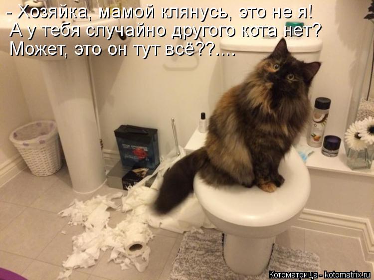 Котоматрица: - Хозяйка, мамой клянусь, это не я! А у тебя случайно другого кота нет?  Может, это он тут всё??....