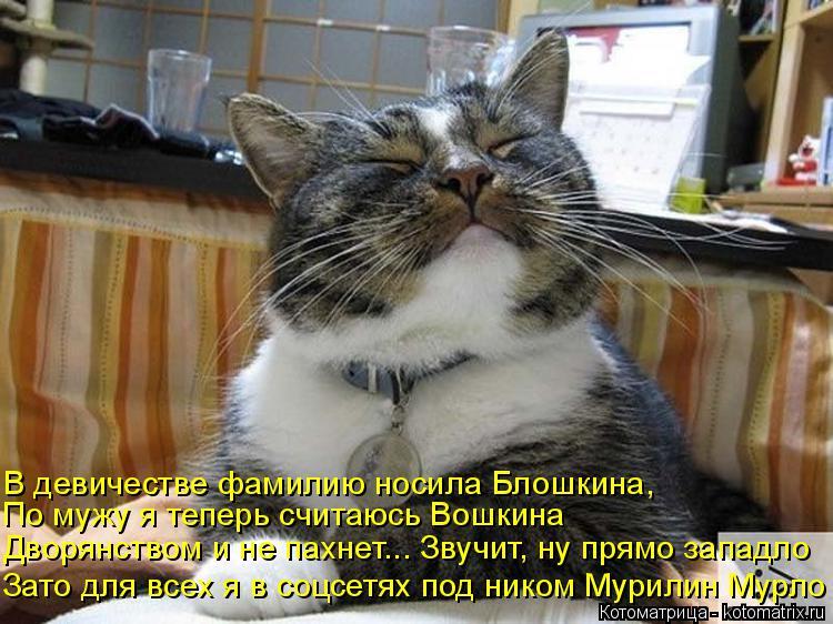 Котоматрица: Зато для всех я в соцсетях под ником Мурилин Мурло  Дворянством и не пахнет... Звучит, ну прямо западло  По мужу я теперь считаюсь Вошкина  В д