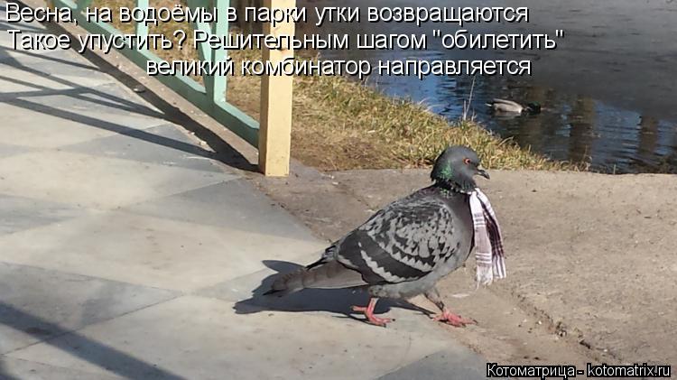 """Котоматрица: Весна, на водоёмы в парки утки возвращаются Такое упустить? Решительным шагом """"обилетить"""" великий комбинатор направляется"""