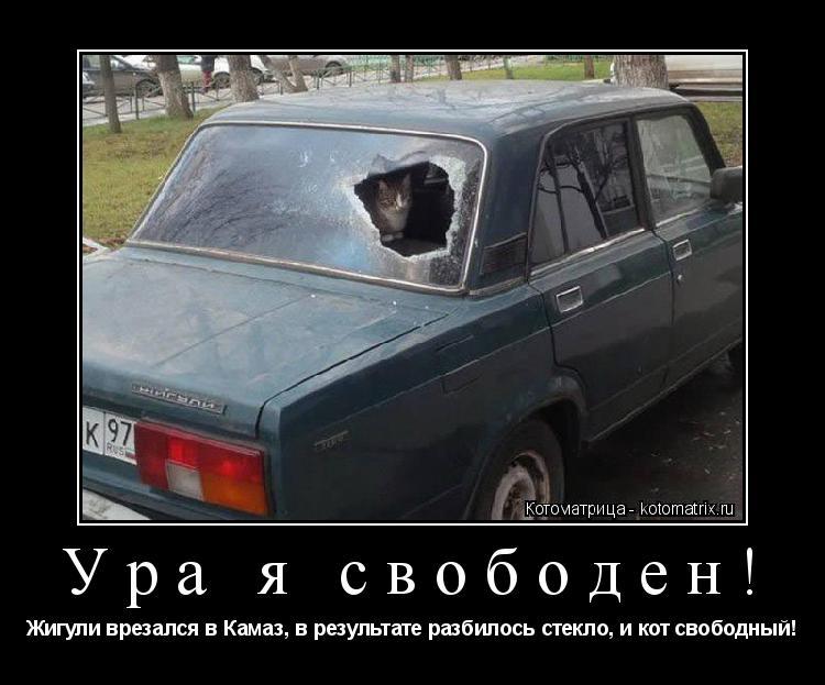 Котоматрица: Ура я свободен! Жигули врезался в Камаз, в результате разбилось стекло, и кот свободный!