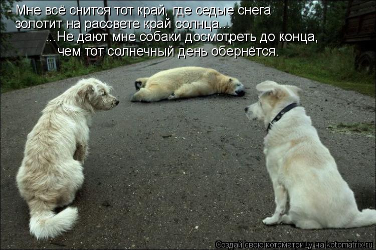 Котоматрица: ...Не дают мне собаки досмотреть до конца, чем тот солнечный день обернётся. - Мне всё снится тот край, где седые снега  золотит на рассвете кр