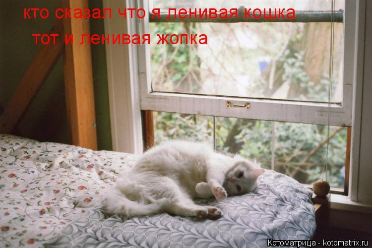 Котоматрица: кто сказал что я ленивая кошка тот и ленивая жопка
