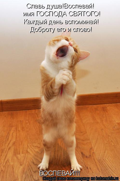 Котоматрица: Славь душа!Воспевай! имя ГОСПОДА СВЯТОГО! Каждый день вспоминай! Доброту его и слово! ВОСПЕВАЙ!!!
