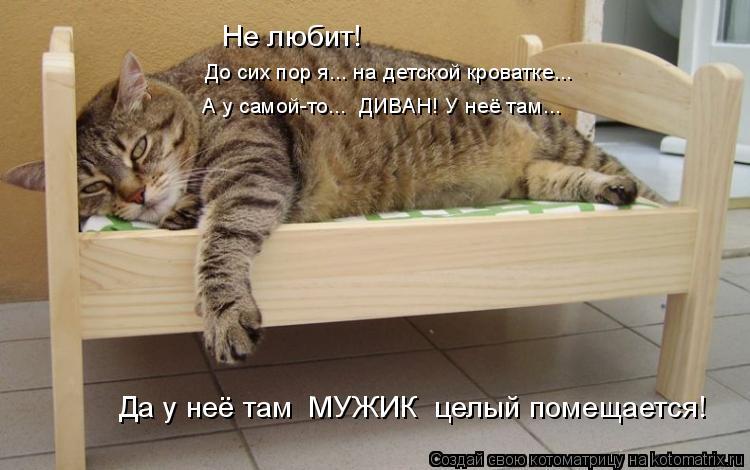 Котоматрица: Не любит! До сих пор я... на детской кроватке... А у самой-то...  ДИВАН! У неё там... Да у неё там  МУЖИК  целый помещается!