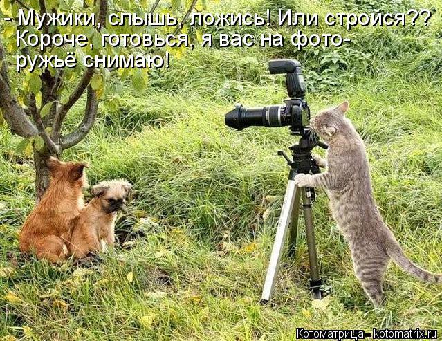 Котоматрица: - Мужики, слышь, ложись! Или стройся?? Короче, готовься, я вас на фото- ружьё снимаю!