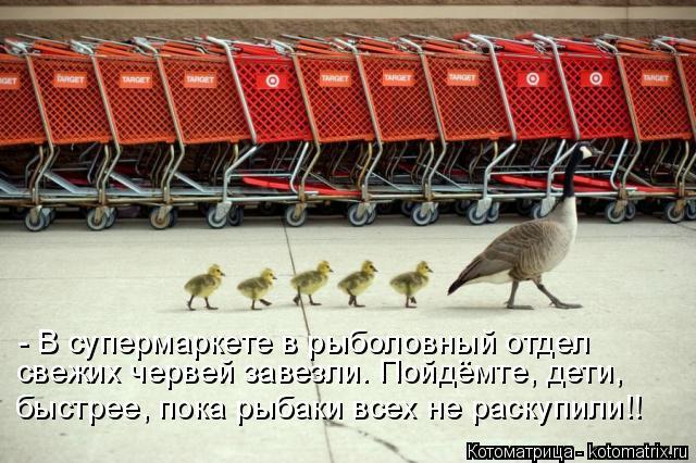 Котоматрица: - В супермаркете в рыболовный отдел  свежих червей завезли. Пойдёмте, дети, быстрее, пока рыбаки всех не раскупили!!