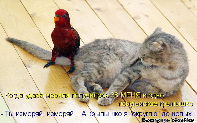 """Котоматрица: - Ты измеряй, измеряй... А крылышко я """"округлю"""" до целых   - Когда удава мерили получилось 38 МЕНЯ и одно попугайское крылышко"""
