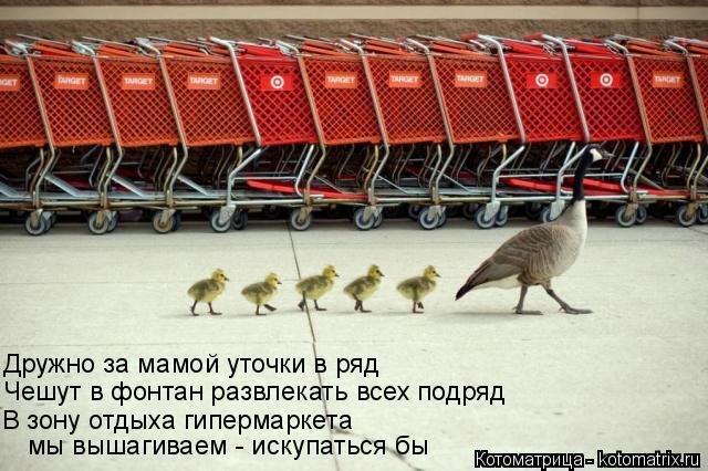 Котоматрица: В зону отдыха гипермаркета  Чешут в фонтан развлекать всех подряд  Дружно за мамой уточки в ряд  мы вышагиваем - искупаться бы