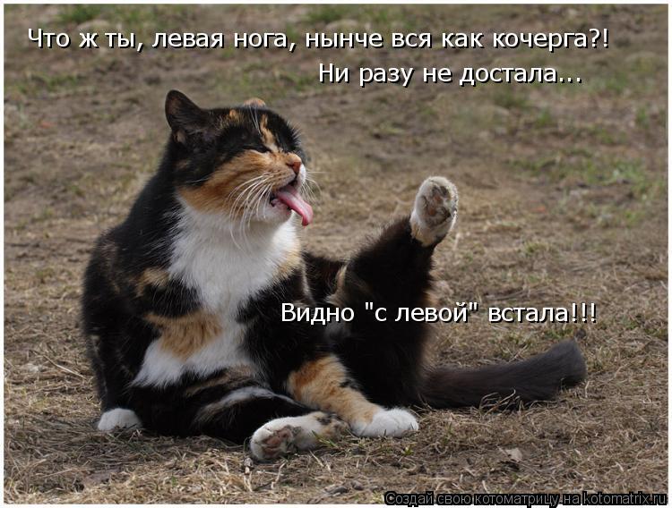 """Котоматрица: Видно """"с левой"""" встала!!! Что ж ты, левая нога, нынче вся как кочерга?! Ни разу не достала..."""
