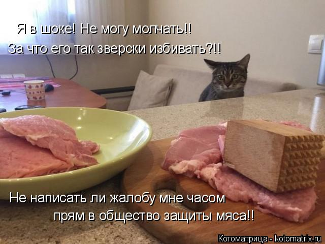 Котоматрица: Я в шоке! Не могу молчать!! За что его так зверски избивать?!! Не написать ли жалобу мне часом прям в общество защиты мяса!!